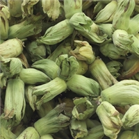 Organic Green/Golden Kentish Cobnuts