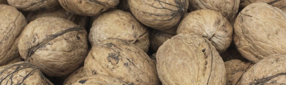 - Walnuts