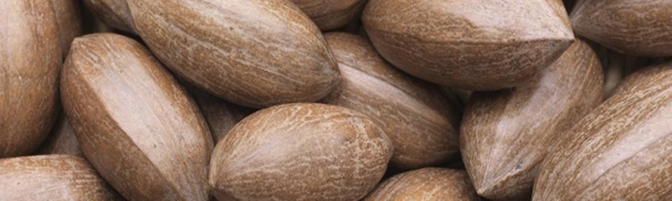 - Pecan Nuts
