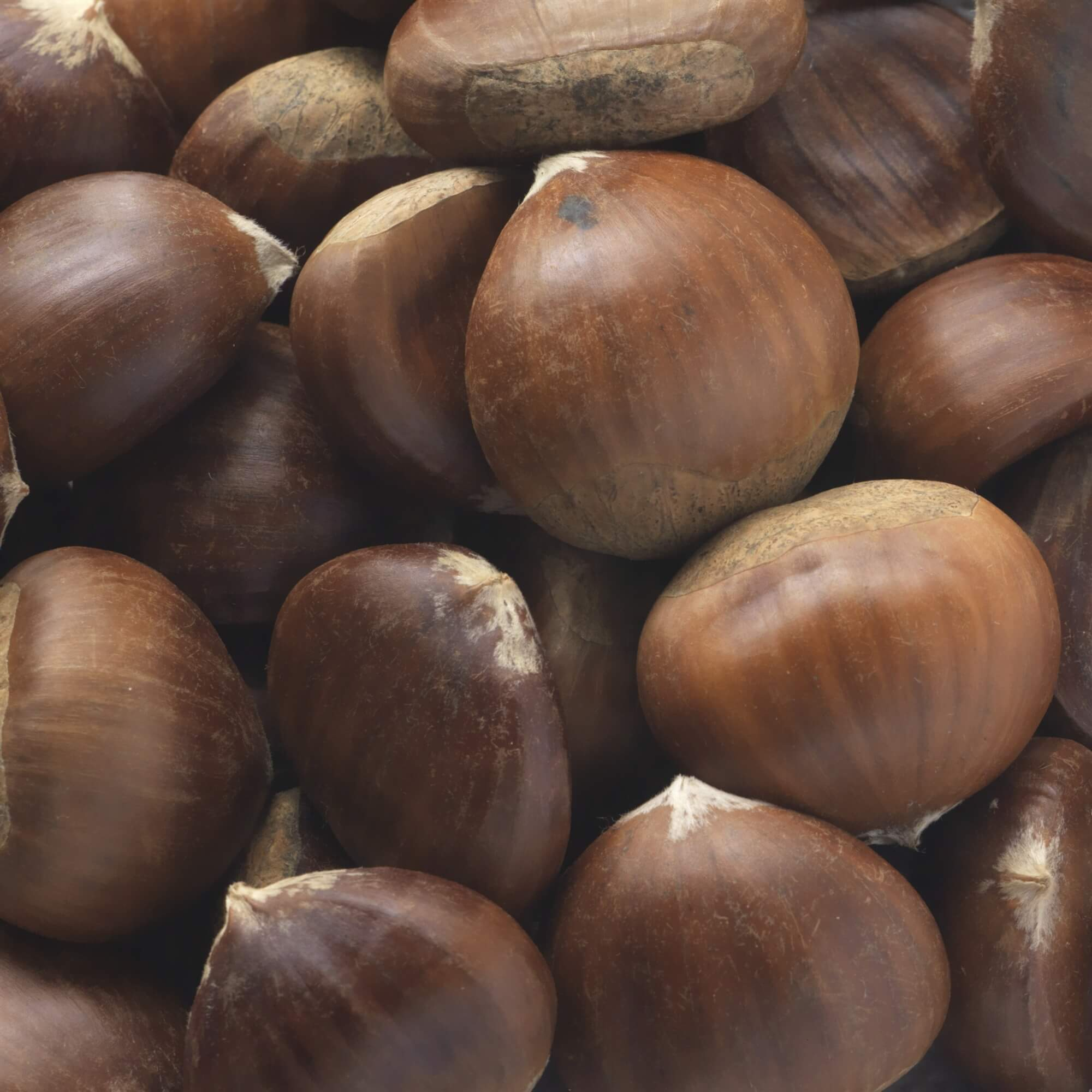 Chestnuts - A Chestnut is an edible nut often encased in a prickly husk and mainly grown in Spain, Italy and France.