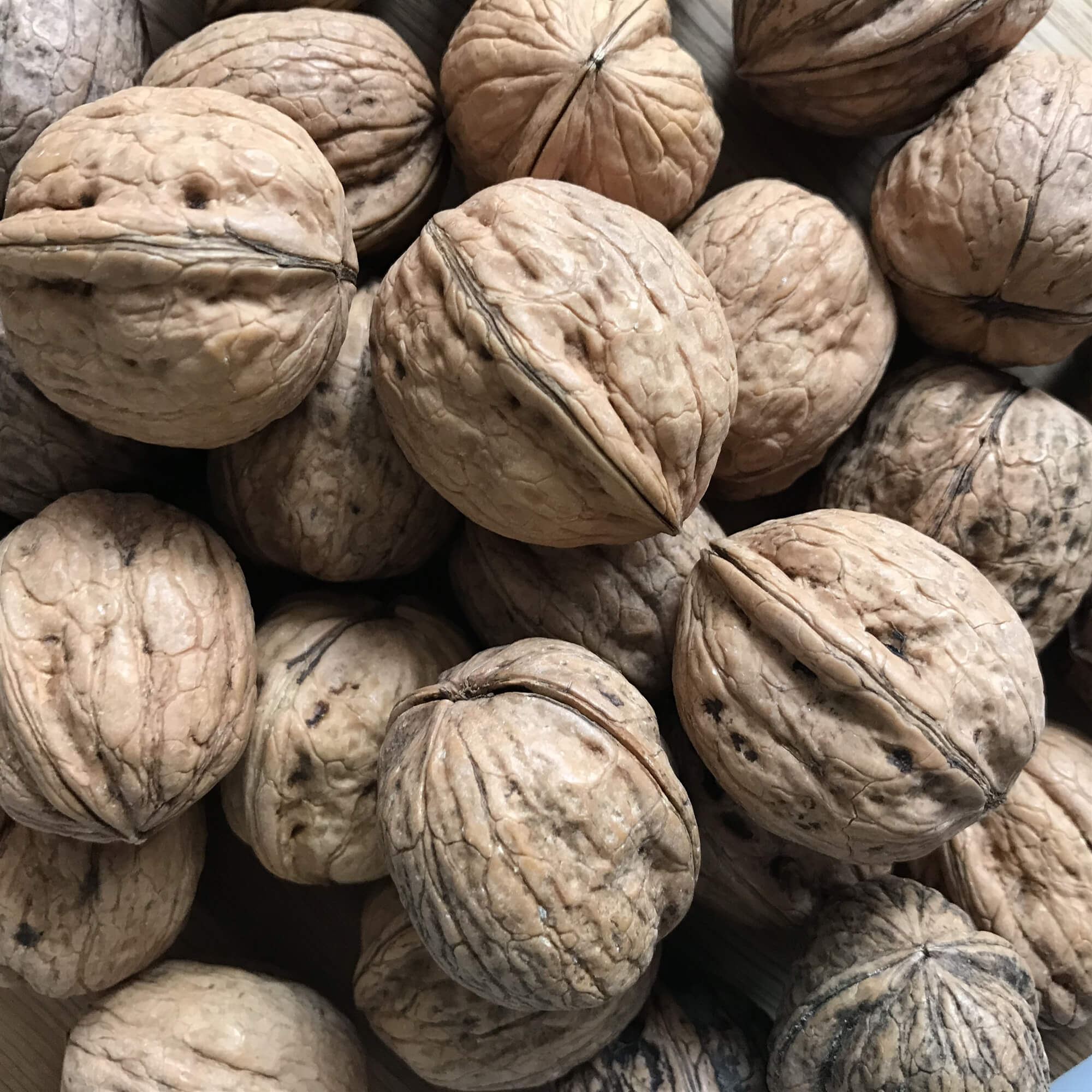 Farm Produced Walnuts - A Walnut is an edible nut often encased in a smooth green husk and mainly grown in California, France and Italy.