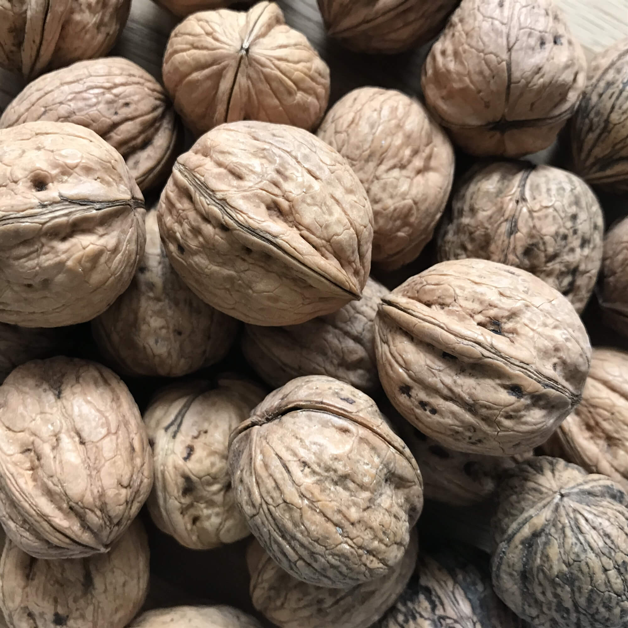 Walnuts - A Walnut is an edible nut often encased in a smooth green husk and mainly grown in California, France and Italy.