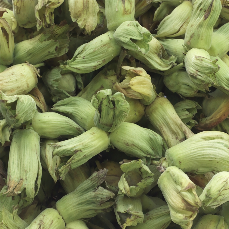 Naturally Grown Green/Golden Kentish Cobnuts